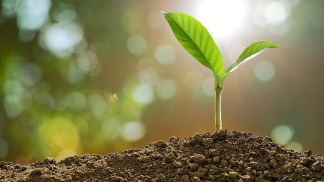 Climate change being fuelled by soil damage