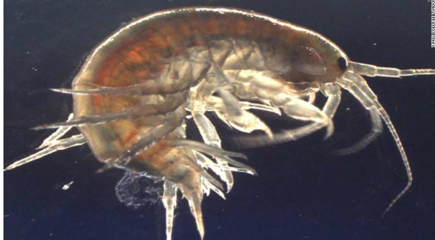Scientists find cocaine in UK shrimp