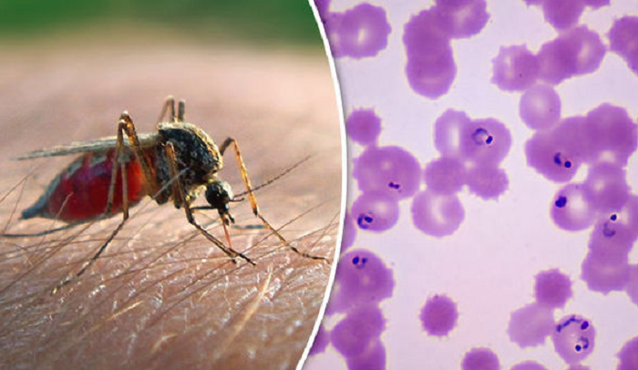 Survey finds new weapon against drug resistant malaria