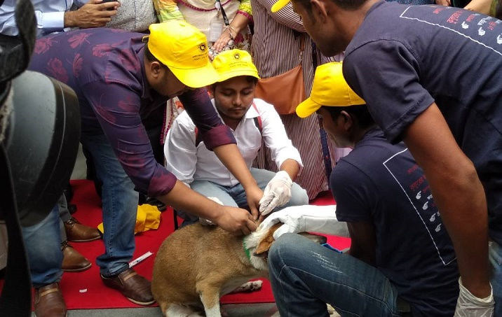 Dog vaccination in Dhaka city begins May 14