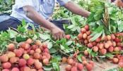 Litchi starts appearing in Rajshahi markets