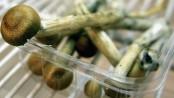 Denver votes to decriminalise magic mushrooms by razor-thin margin