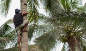 DU student dies of falling from coconut tree