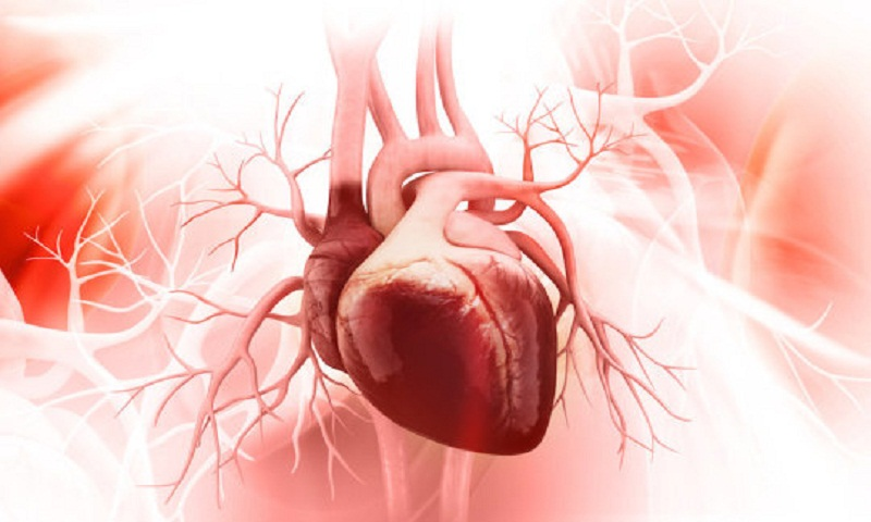 Genetic therapy helps heal damage caused by heart attack