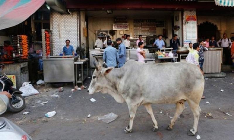 Man shot dead over allegation of smuggling cows in Kashmir