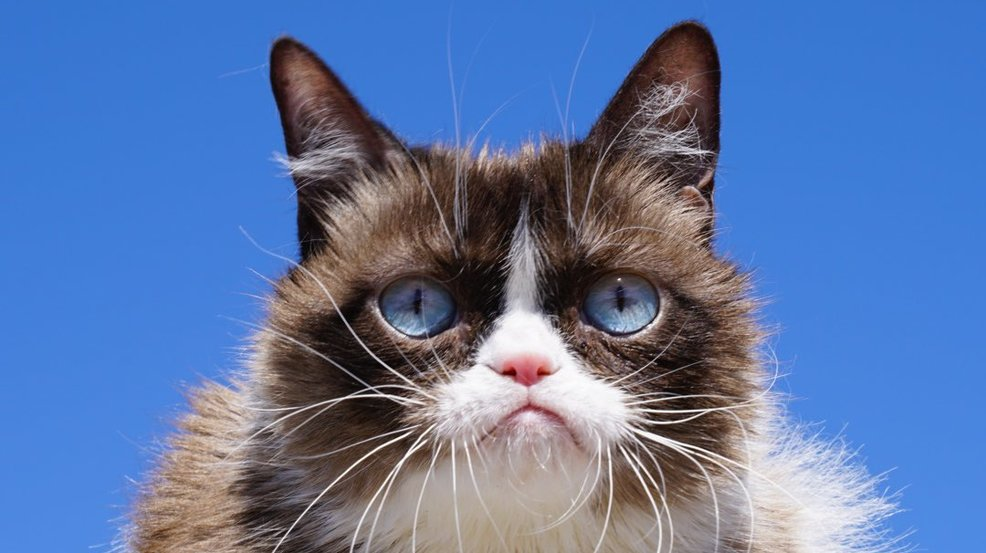Internet pet sensation 'Grumpy Cat' dies at age of 7