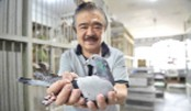The deadly odds of pigeon racing in the Philippines