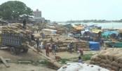 Rice prices fall hits farmers hard in Brahmanbaria