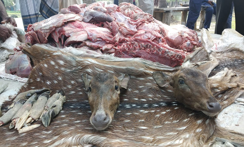 200 kg venison, 2 deer heads seized in Barguna