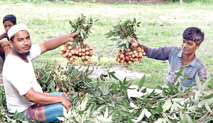 Call for cultivation of new fruit varieties