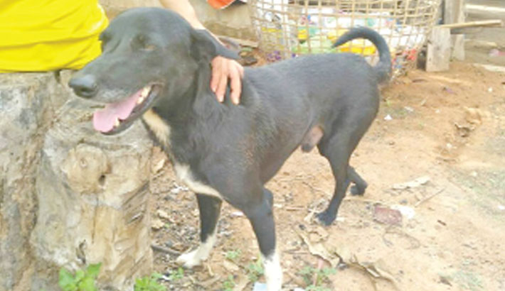 Hero dog saves buried  baby in Thailand