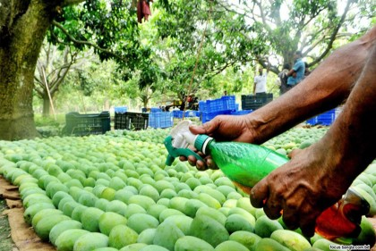 Use of chemicals: Govt asked to monitor fruit markets