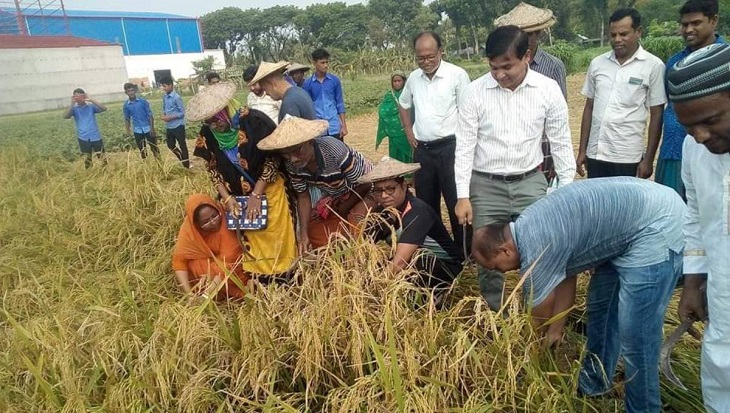 Chuadanga DC joins farmers in harvesting paddy