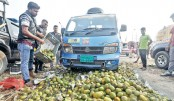400 mounds artificially ripened mango destroyed