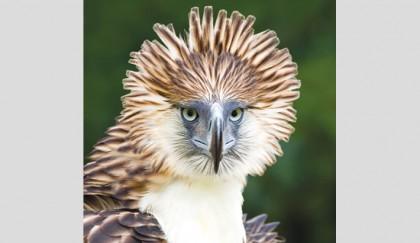 Bird returned to S Korean wild 40 years after extinction