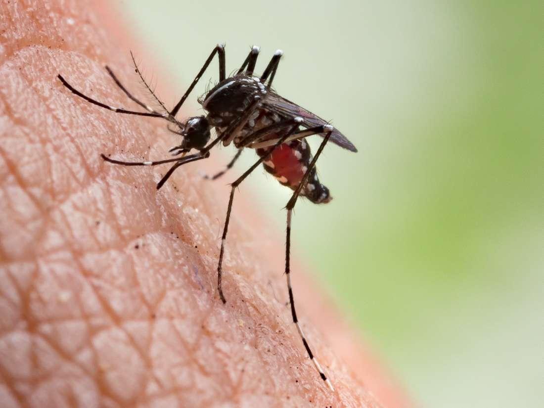 Malaria back with a vengeance in crisis-hit Venezuela