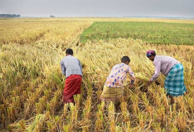 Govt working to save farmers: Food Minister