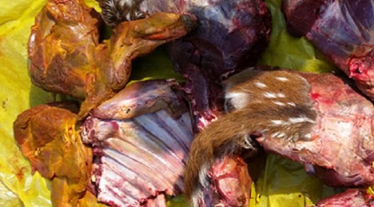 Man held with 8kg venison in Sundarbans