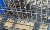 Large snake hiding in shopping cart gives man a scare