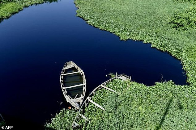 In Nigeria's Lagos, aquatic weed plagues waterways