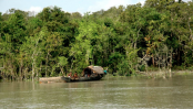 Sundarbans has Tk 18,816-cr carbon reserve: Survey