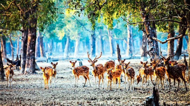 Holidaymakers throng Sundarbans