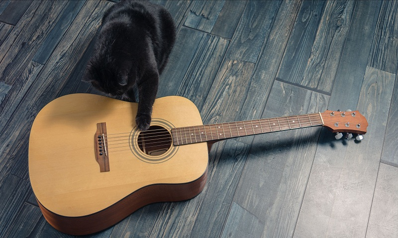 Cat plays guitar to wake up human, video goes viral
