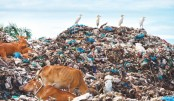 Rubbish pile at a waste dump