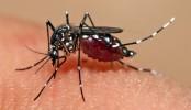 Dengue breaks out in capital