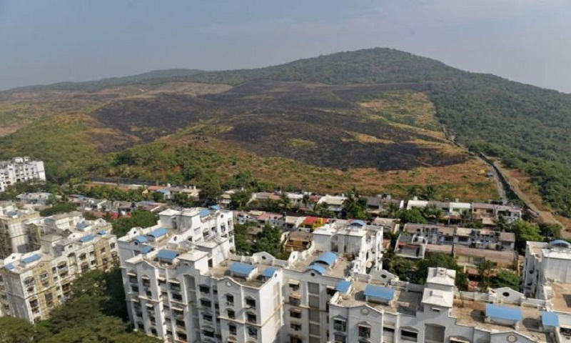 Aarey forest: The fight to save Mumbai's last 'green lung'