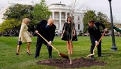 Tree symbolizing Trump-Macron friendship dies