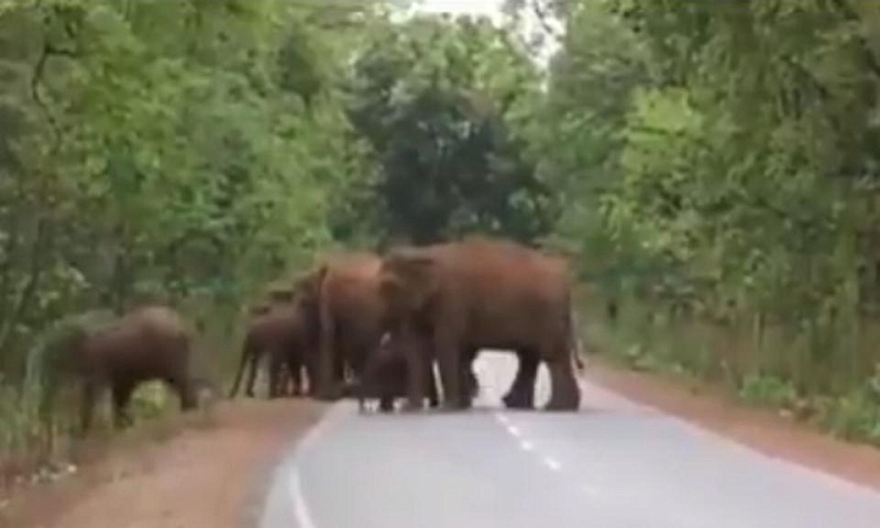 Elephants take out 'funeral procession' for dead calf, video goes viral