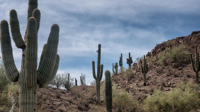 6-year-old Indian migrant girl dies in Arizona desert as mother sought water