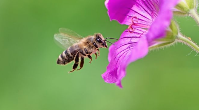 Bees can connect symbols to numbers