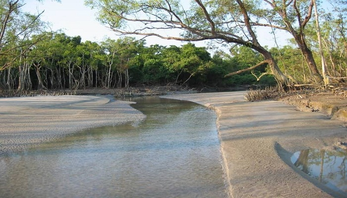 IUCN advises placing Sundarbans on 'World Heritage in danger' list