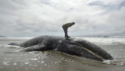 Washington state waterfront owners asked to take dead whales