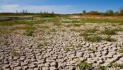 Dryland degradation eats up 8pc domestic product: UN