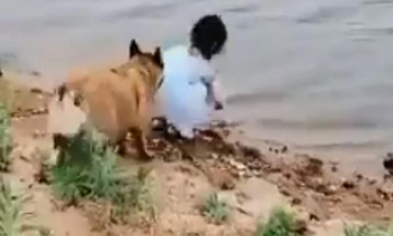 Dog saves girl from falling into water