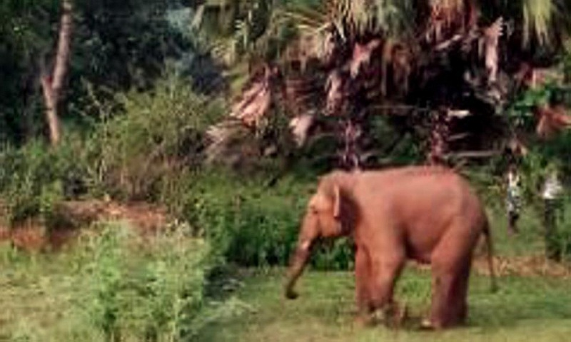 Elephant leaves 8 dead in India's Jharkhand  in 3 weeks