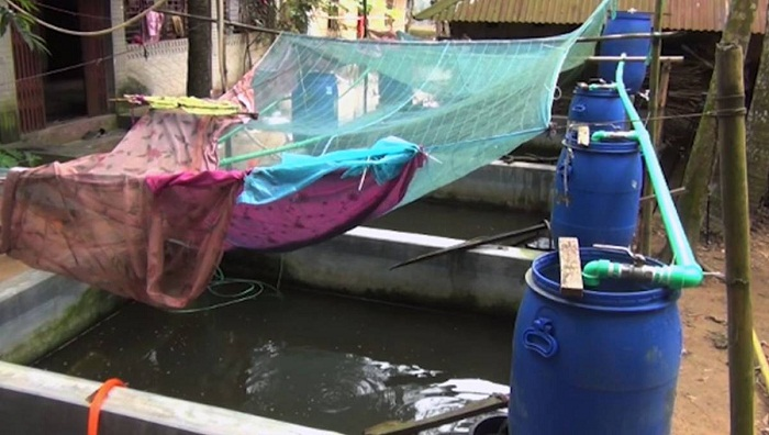 Cumilla youth shows how to farm fish in yard pools