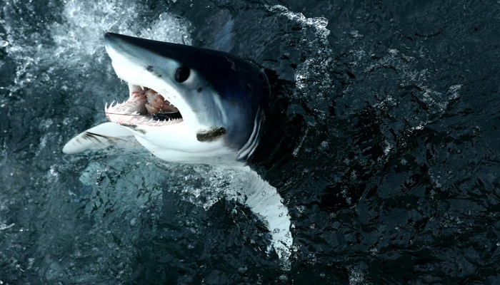 Greenpeace sounds alarm over shark overfishing in North Atlantic