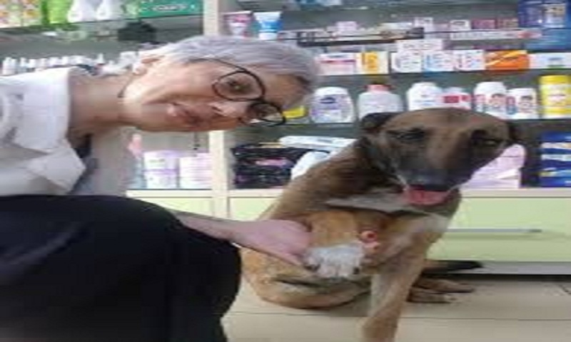 Injured dog runs into pharmacy to seek help, waits patiently while being treated