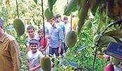 Tree fair draws huge plant lovers