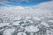 Antarctic sea ice is declining dramatically