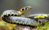 15- yr-old bitten by snake kept at home for prayers to revive her