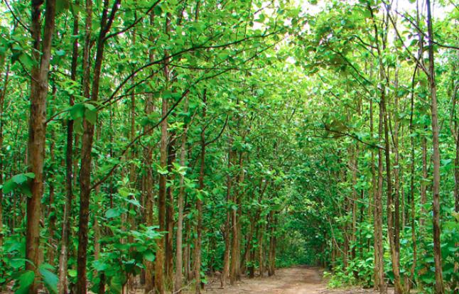 One lakh trees to be planted marking Bangabandhu's birth centenary