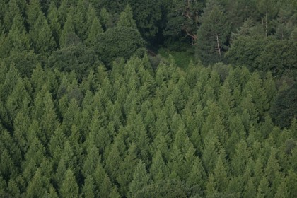 Reforestation could cut carbon levels by two-thirds, study