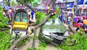 Roadside tree falls on car
