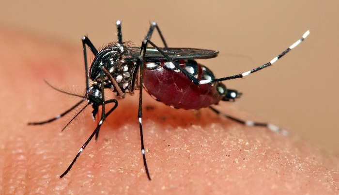 Lawyer serves legal notice to DSCC over wife's dengue fever