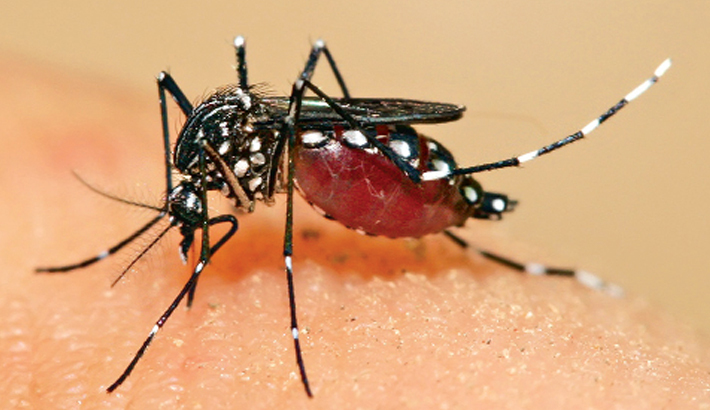 DCC on look for new mosquito killers to tackle dengue